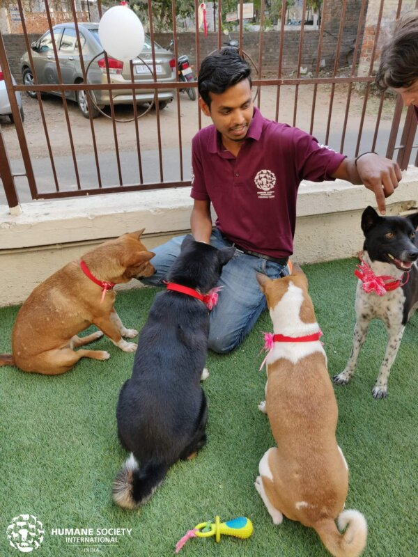 Dogs Rescued From Meat Trade