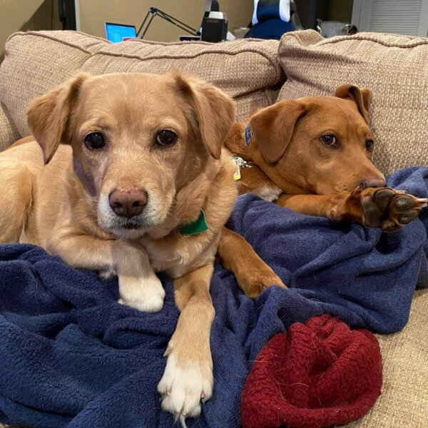Dogs cuddling on couch
