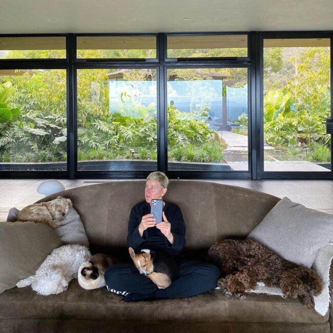 Ellen Degeneres and Dogs