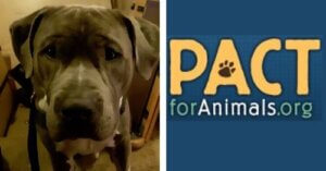 floyd pets for vets