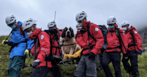 Saint Bernard Mountain Rescue