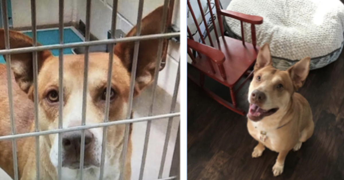 Dog Rescued From Kill Shelter