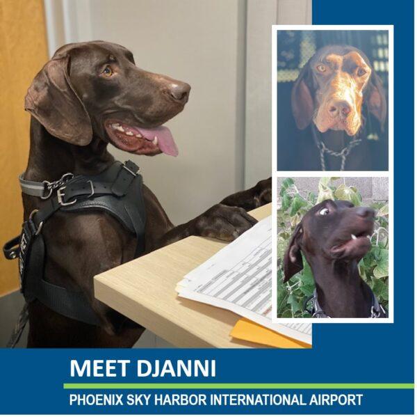 TSA dog Djanni