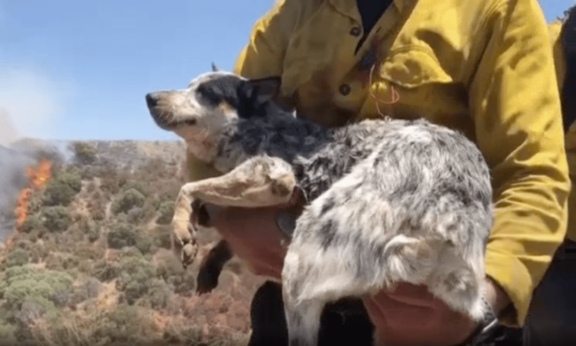 Dog Carried on Mountain