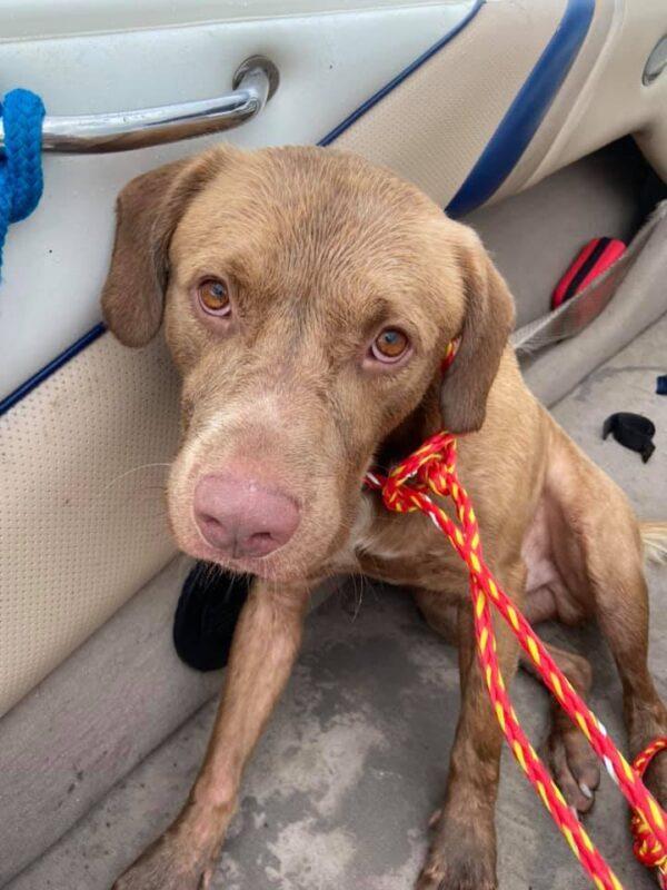 Dog Boat Rescue