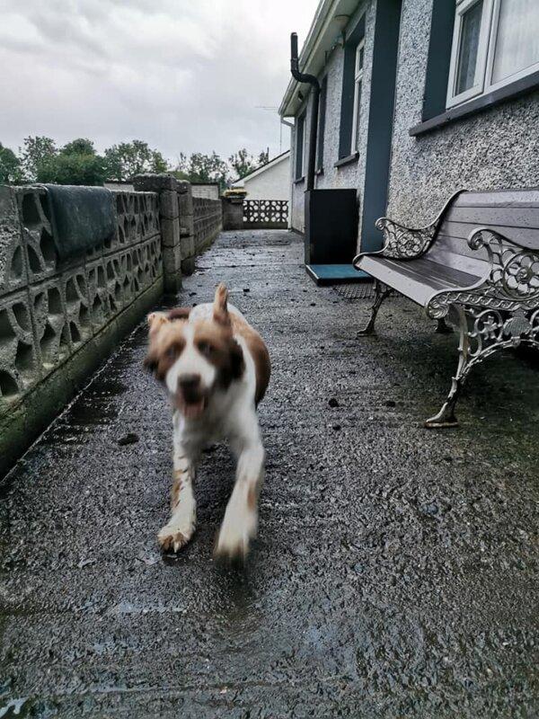 Dog Running Forward