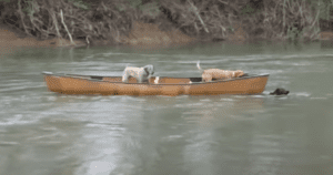 Dog Saves Dogs in Canoe