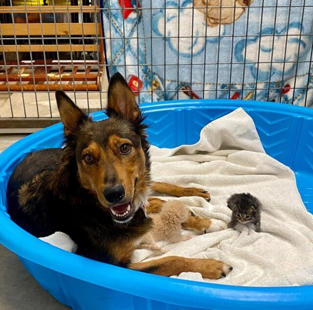 Happy Dog with Kittens