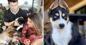 Nick Jonas and Priyanka Chopra's Dogs