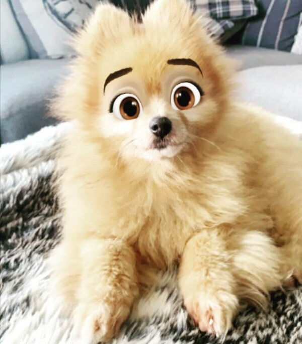 Dogs Around The World Are Ready To Star In Disney Cartoons