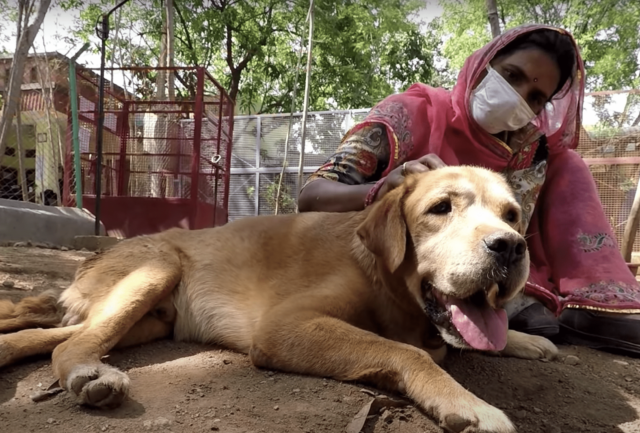Dog Rescued in India