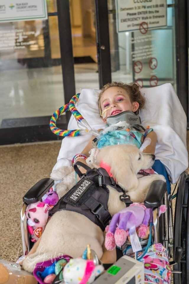 Paralysis Service Dog