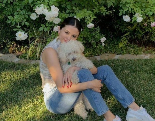 celeb dog photos
