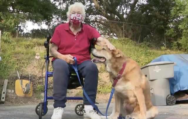 Dog and Elderly Woman