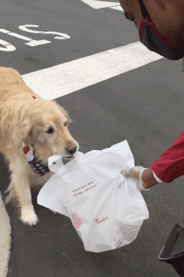 Dog Picks Up Chick-Fil-A