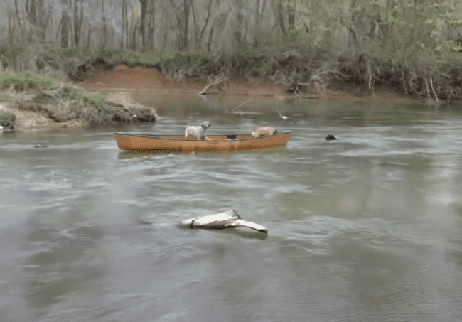 Dog Rescues Canoe