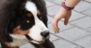 Dog Sniff Test