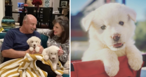 Dr. Phil Adopts Puppies
