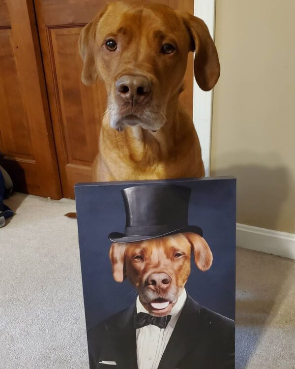 Fancy Dog Portrait