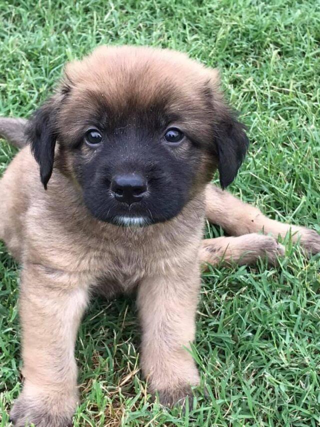 Conley as a puppy
