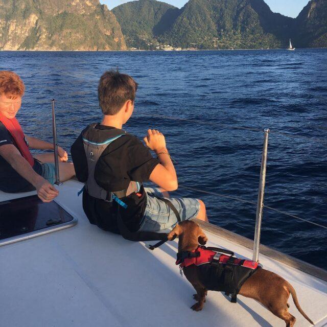 Dachshund on boat