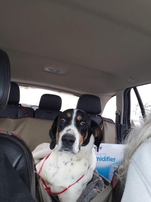 Gracie Car Ride
