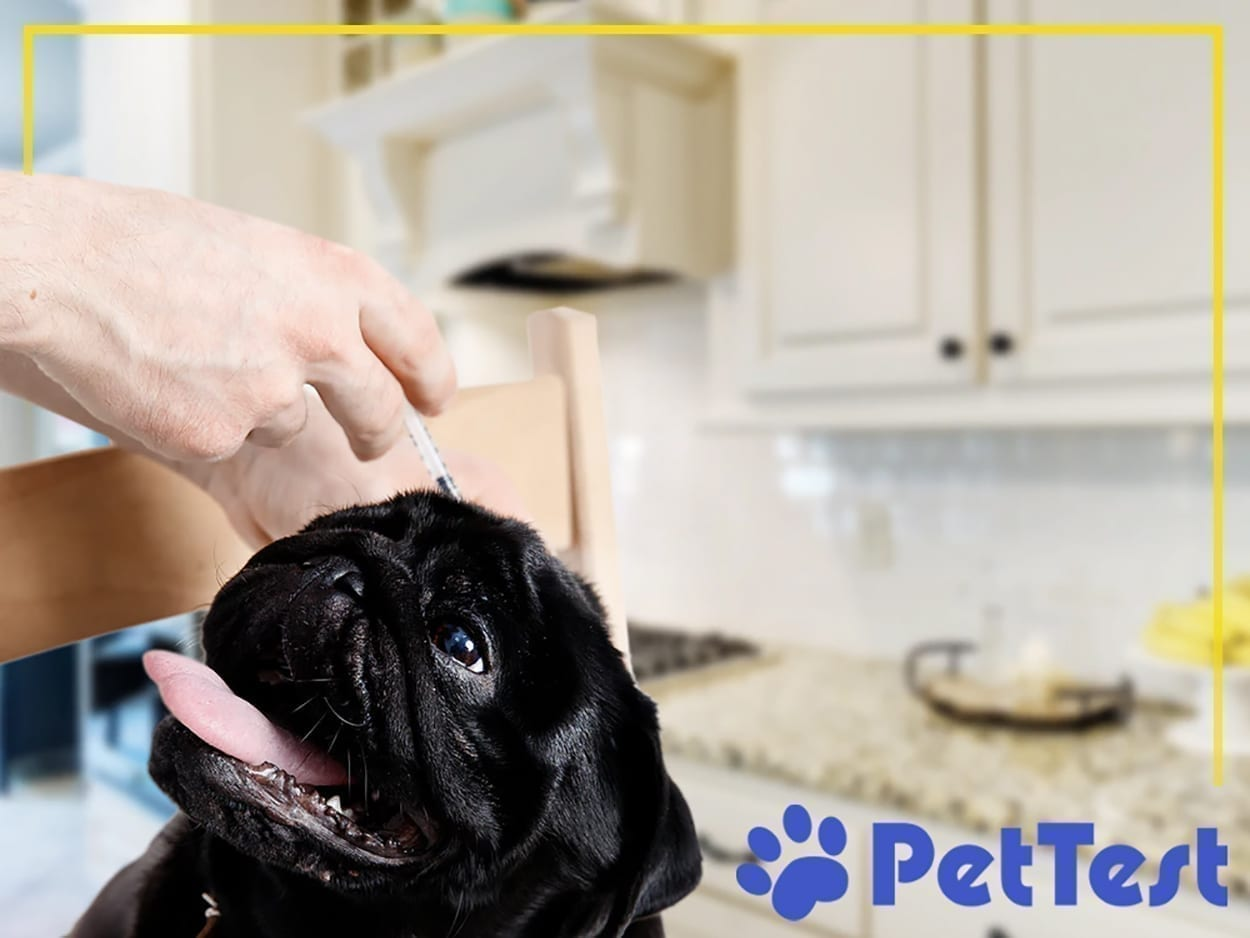 Should you home test your diabetic dog? A deep dive into the specifics: