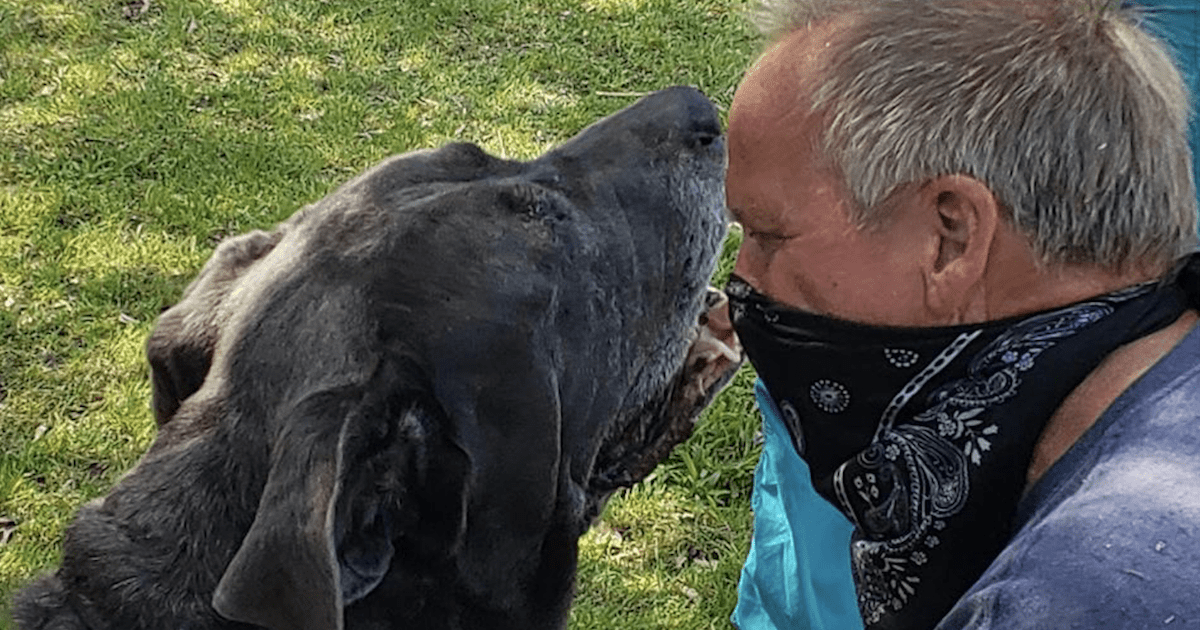 Mastiff Rescued