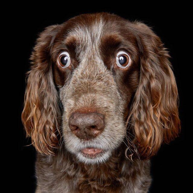Dog with Crazy Eyes