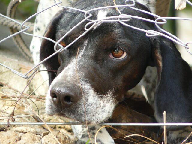 Animal neglect