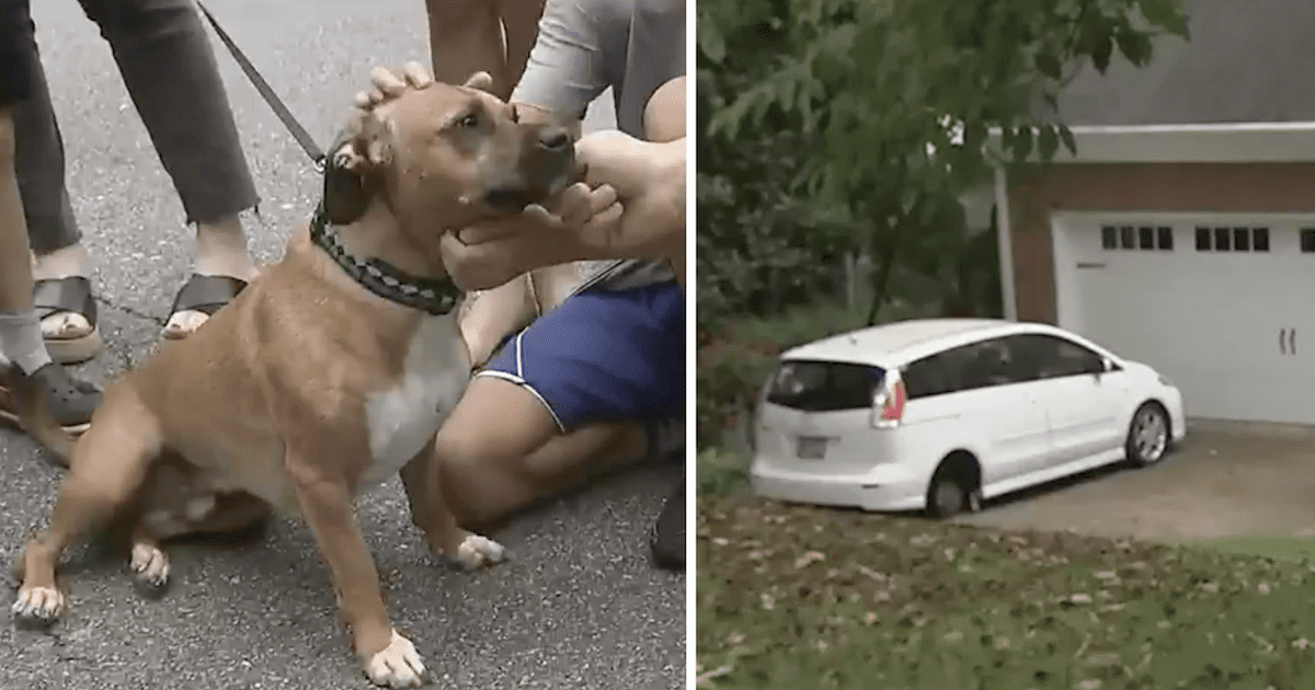 Dog Rescues Neighbor