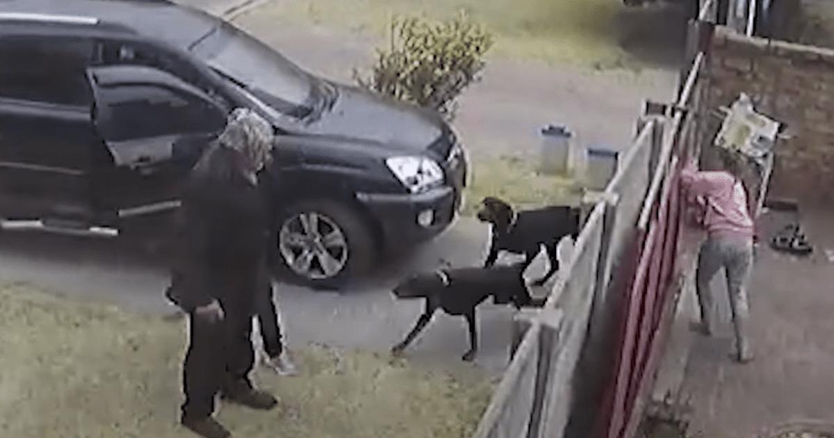 Dog attacks armed robber