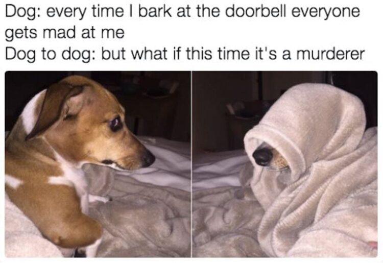 Dog to dog