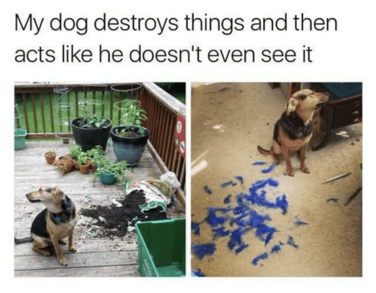 Dog destroys things