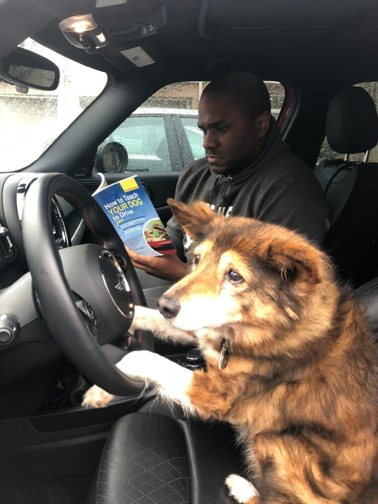 Dog driving lessons