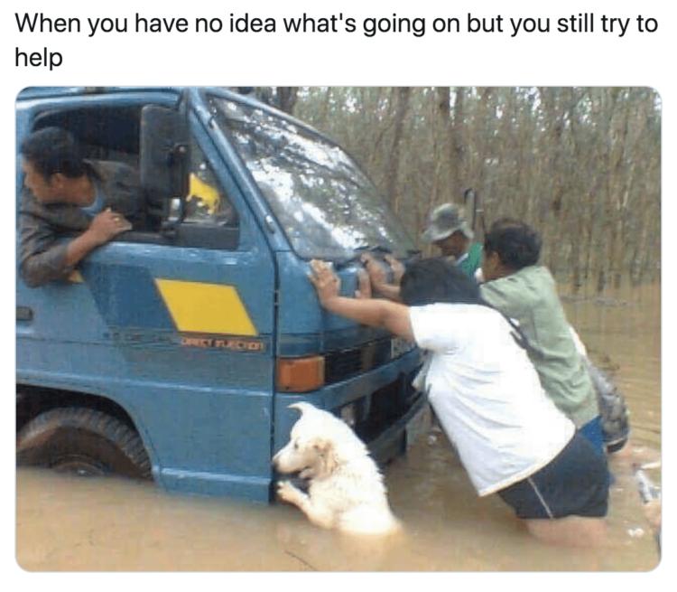 Dog helps