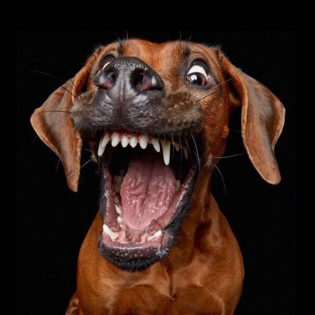 Dog laughs
