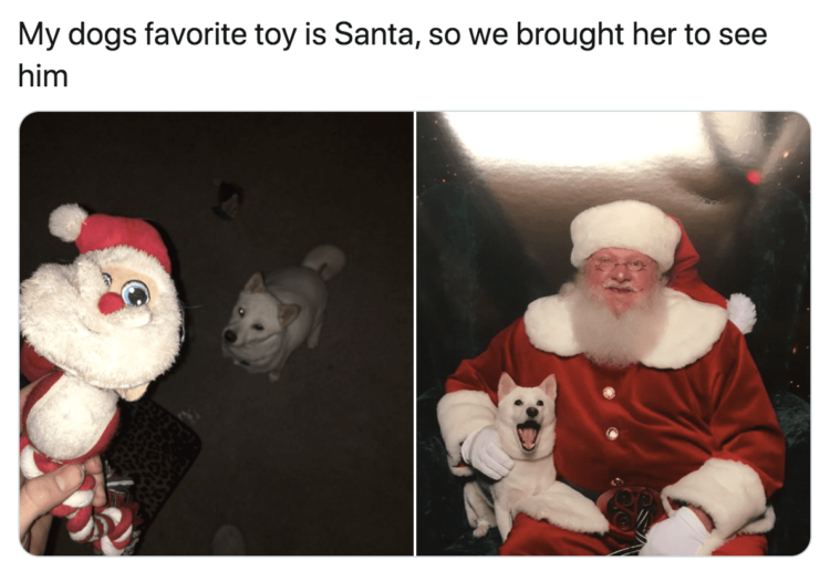 Dog meets Santa Claus