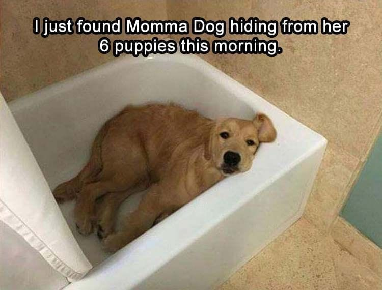 Dog is hiding from puppies