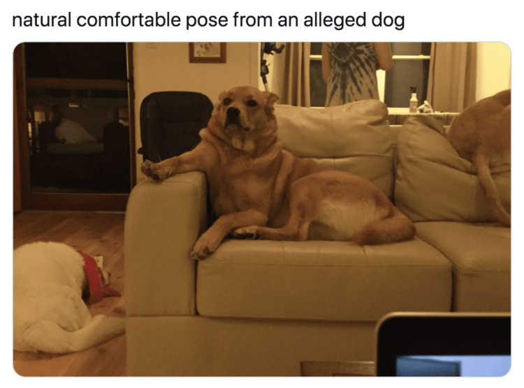 Dog relaxes on the couch