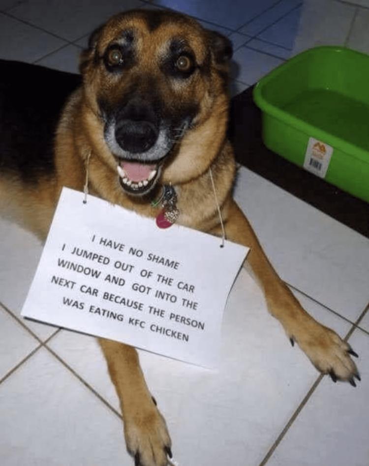 Dog ashamed