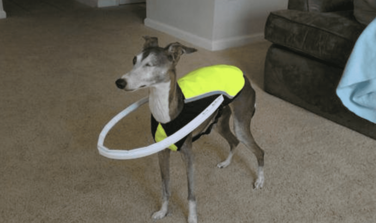 Dog space suit
