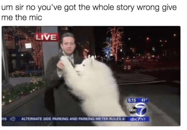 Dog steals microphone
