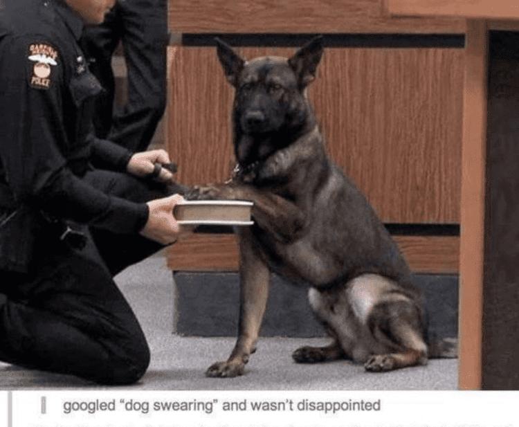 Dog swearing