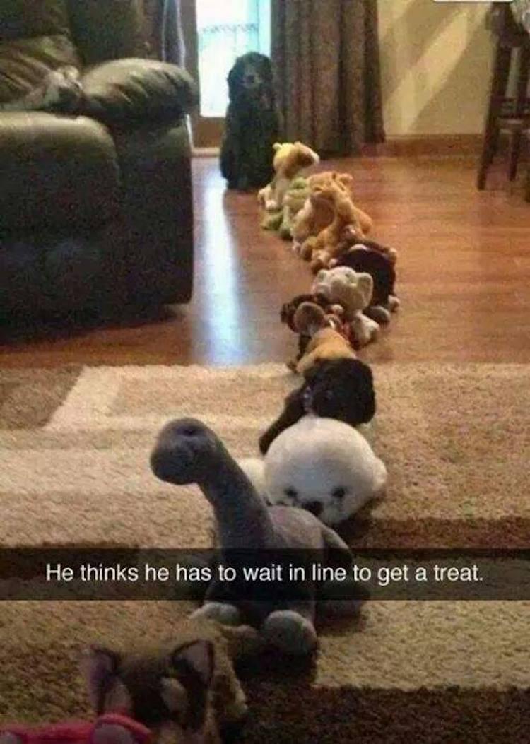 Dog waits for treat
