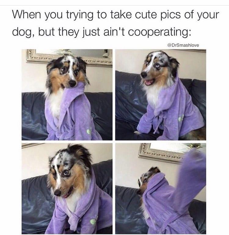 Dog is wearing robe