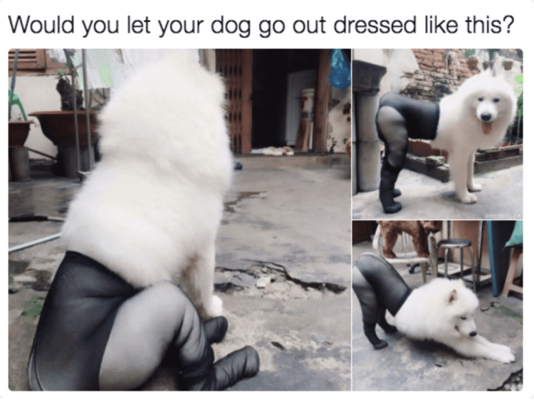 Dog is wearing tights