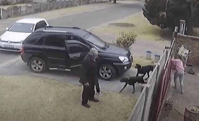 Dogs fight armed robbers