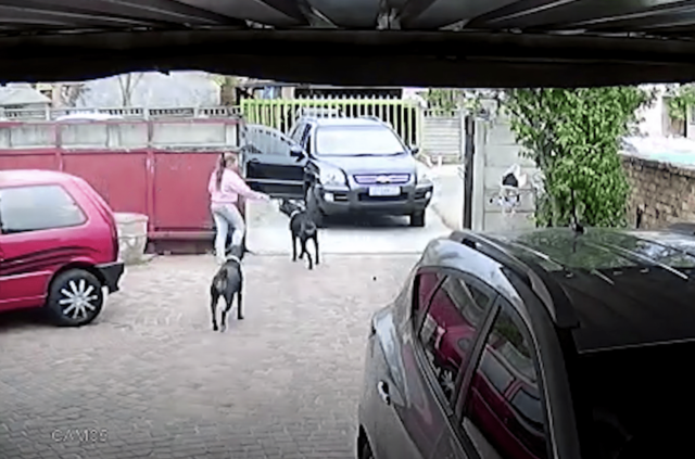 Dogs running out of yard