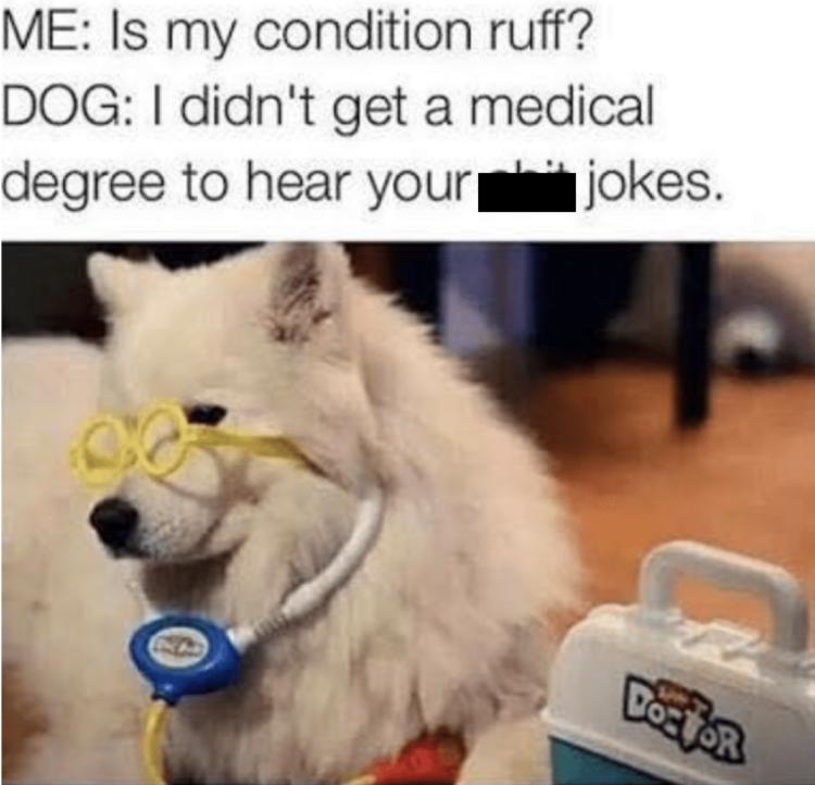 Dogtor meme